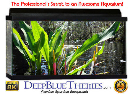 Buy Aquarium Background Swamp Flower Aquarium Background