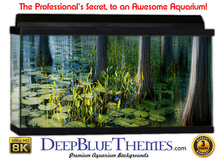 Buy Aquarium Background Swamp Reflect Aquarium Background
