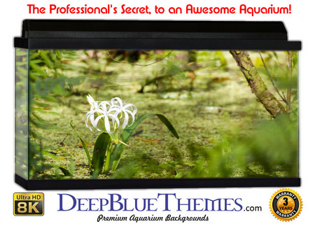 Buy Aquarium Background Swamp South Aquarium Background