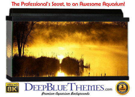 Buy Aquarium Background Swamp Sunset Aquarium Background