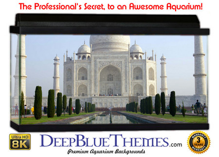 Buy Aquarium Background Travel Taj Aquarium Background