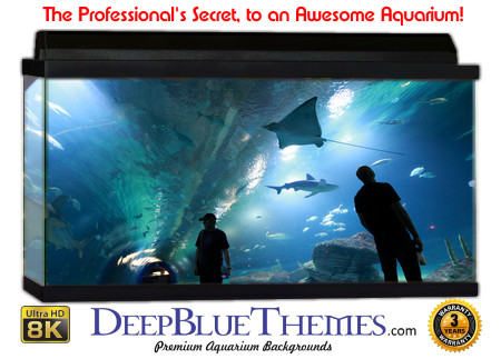 Buy Aquarium Background Unusual Aquarium Aquarium Background