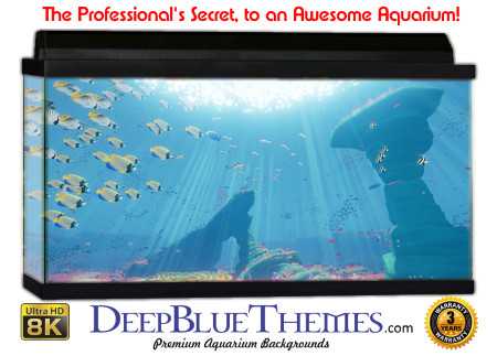 Buy Aquarium Background Unusual Art Aquarium Background