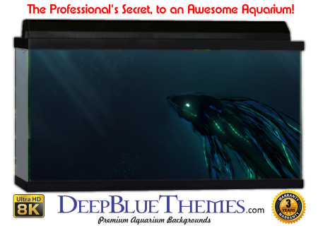 Buy Aquarium Background Unusual Beta Aquarium Background