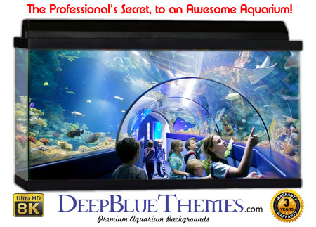 Buy Aquarium Background Unusual Children Aquarium Background