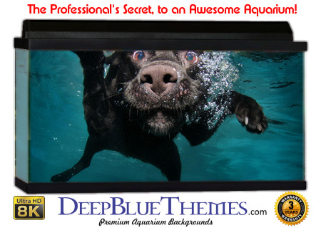Buy Aquarium Background Unusual Dog Aquarium Background