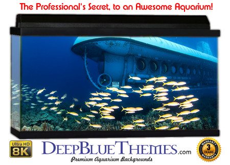 Buy Aquarium Background Unusual Explore Aquarium Background