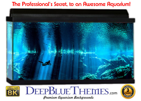 Buy Aquarium Background Unusual Frame Aquarium Background