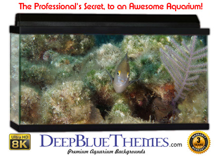 Buy Aquarium Background Unusual Fuzzy Aquarium Background