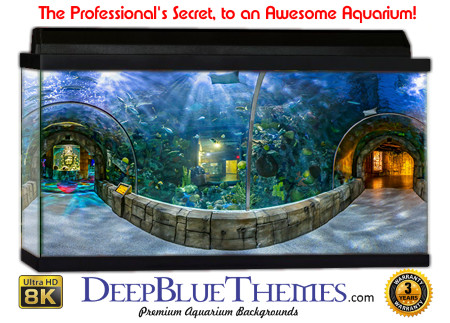 Buy Aquarium Background Unusual Layout Aquarium Background