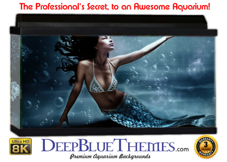Buy Aquarium Background Unusual Mermaid Aquarium Background