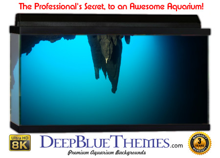Buy Aquarium Background Unusual Overhang Aquarium Background