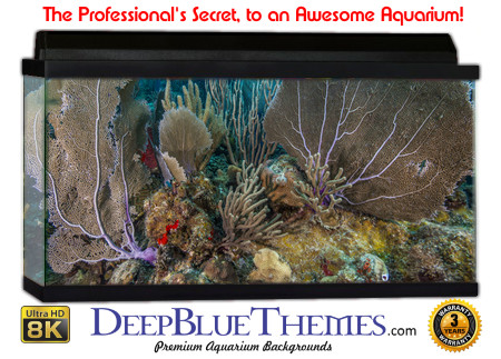 Buy Aquarium Background Unusual Scene Aquarium Background