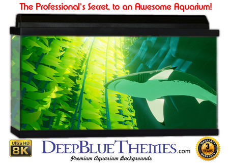 Buy Aquarium Background Unusual Shark Aquarium Background