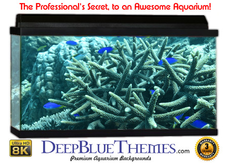 Buy Aquarium Background Unusual Star Aquarium Background